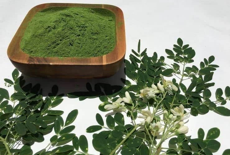 moringa prah biljka
